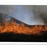 三瓶山西の原の野焼き
